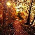 autumn-color-photoshop-action