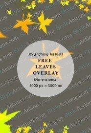 leaves-overlay
