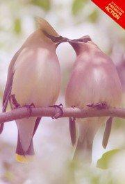 romantic-mood-effect